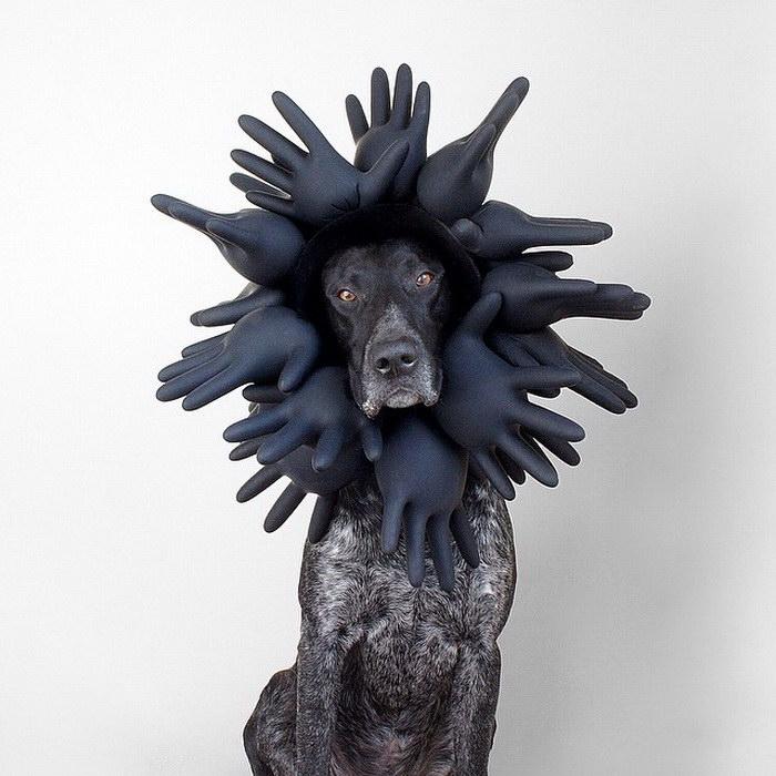 Собака по имени Лал и ее веселые портреты