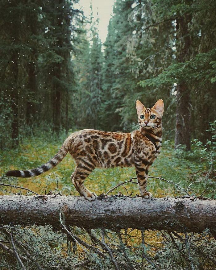 Кошка, которая путешествует больше каждого из нас