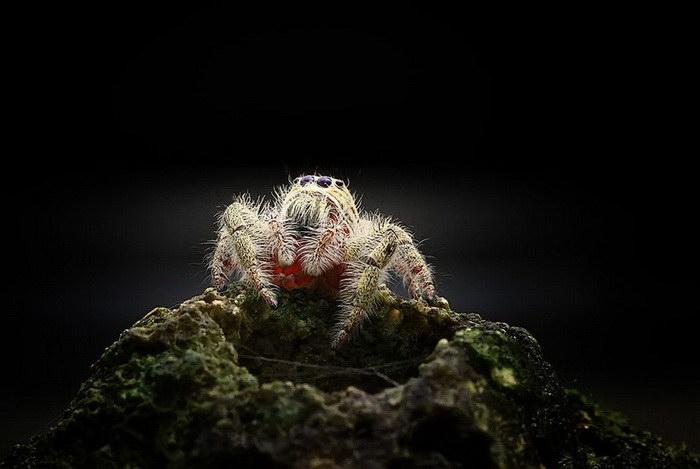 Удивительный мир животных в фотографиях Shikhei Goh