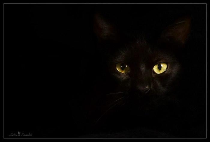 Кошачьи мордочки в фотографиях Helena Bambu