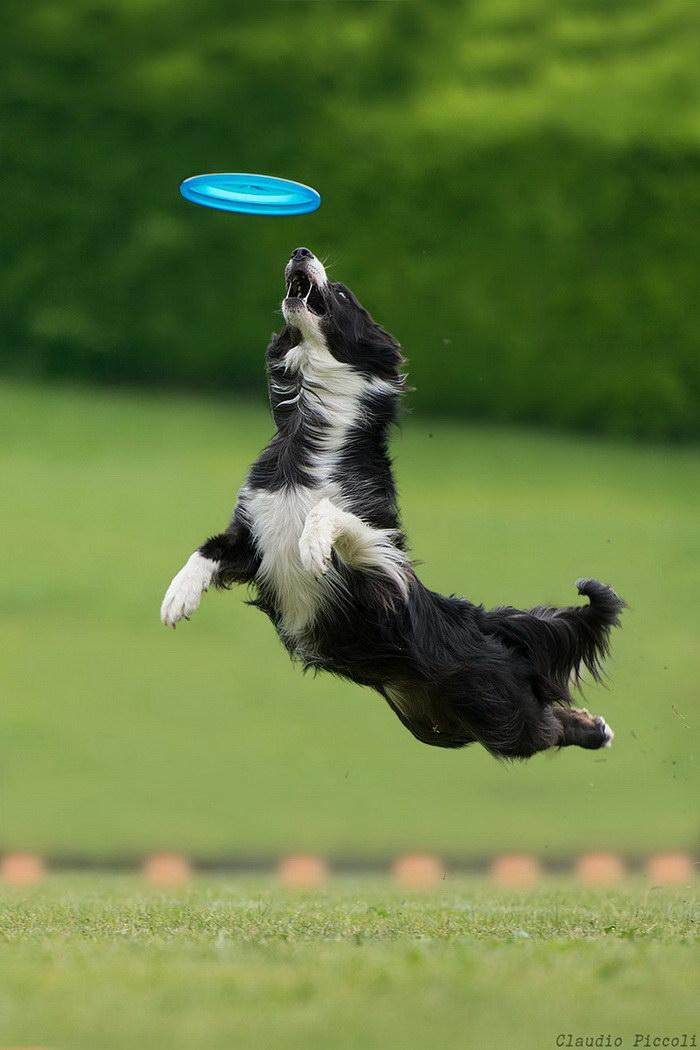 Летающие собаки в фотографиях Claudio Piccoli