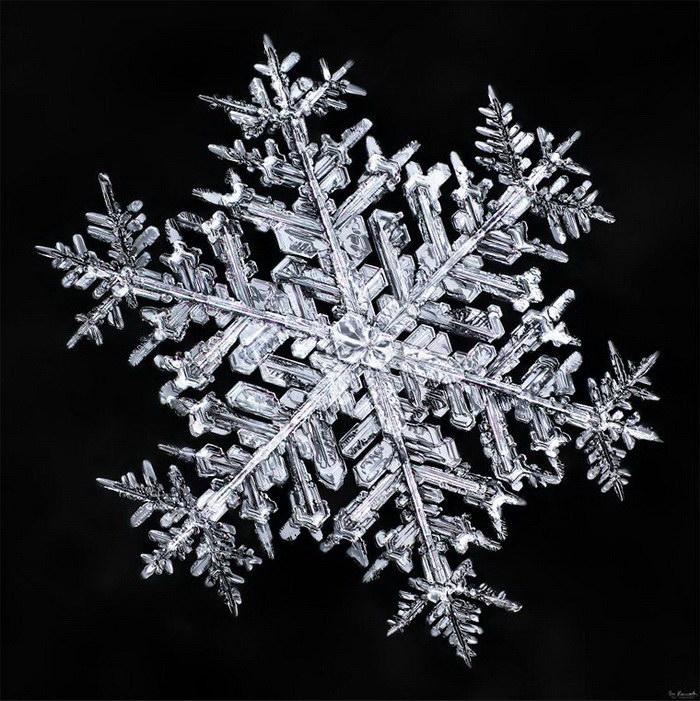 Фотографии снежинок Don Komarechka