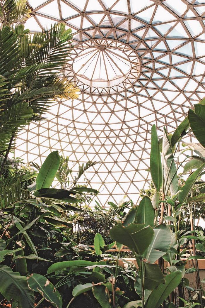 Проект Haarkon: оранжереи и ботанические сады мира
