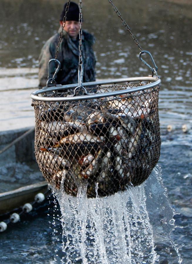 еваяха рыбалка