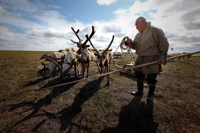 Концепцию развития оленеводства разработают в Магаданской области