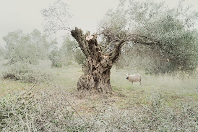 Пейзажи Petros Koublis