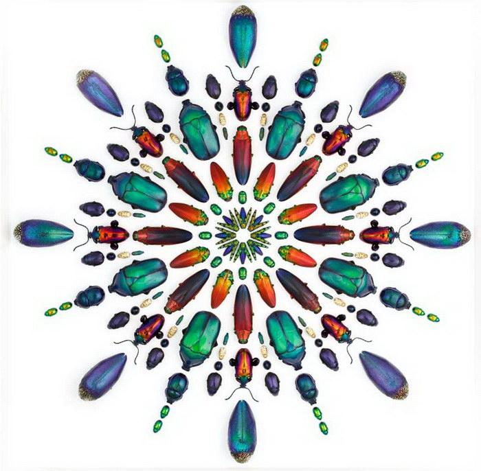 Биологические иллюстрации Christopher Marley