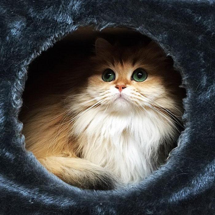 Самый фотогеничный кот на свете: встречайте Смузи!