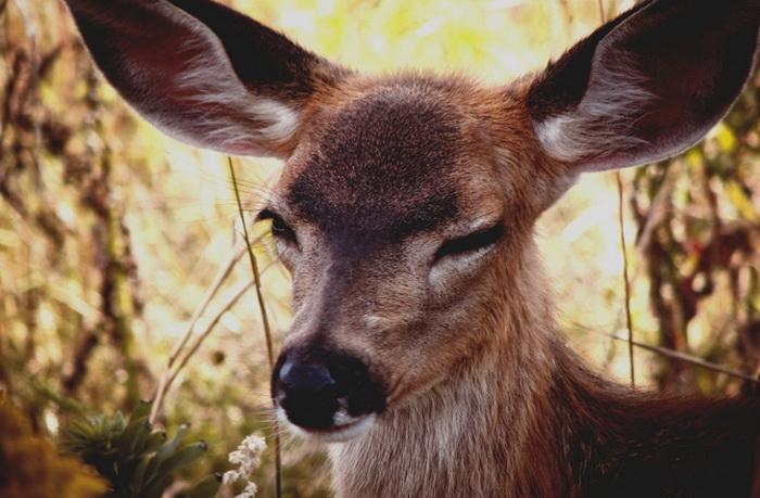 Фото животных Elizabeth Gadd
