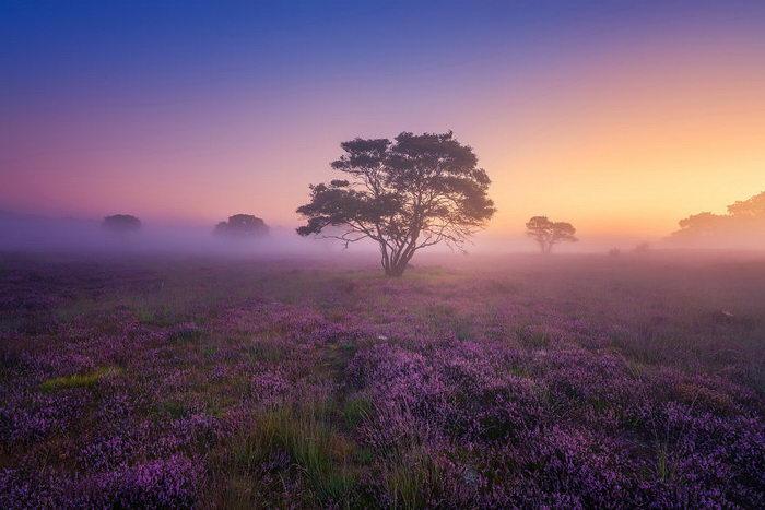 Осенние Нидерланды в снимках Albert Dros