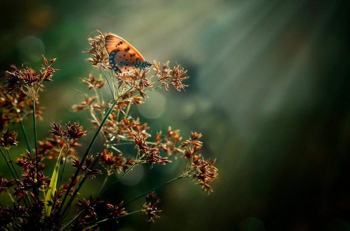Невероятная природа в макро-фотографиях Harfian Herdi