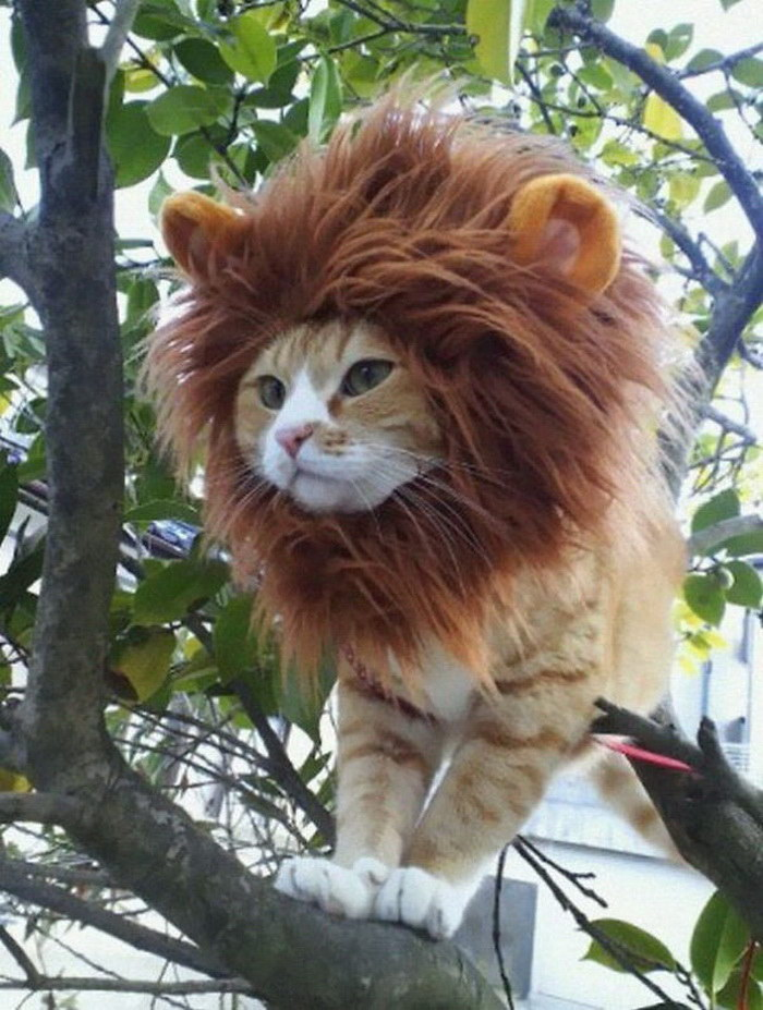 Кошки, которые уже подготовились к Хэллоуину