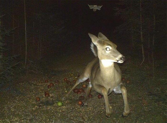 Скрытые камеры в лесу: чем действительно занимаются звери ночью и днем