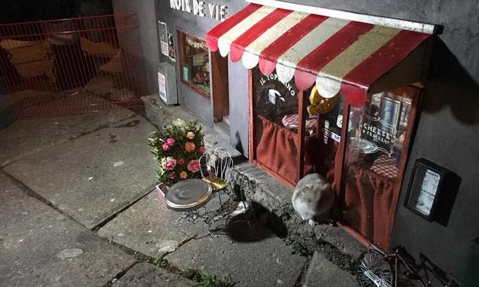 Витрины для мышек в шведском городе Мальме
