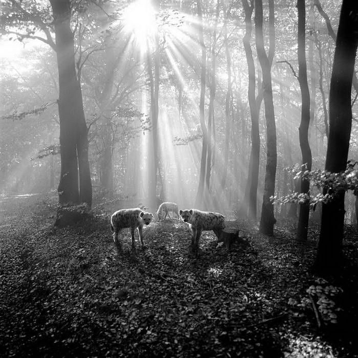 Животное в лесу Frank Machalowski