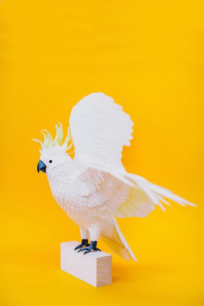 Новая серия бумажных птиц Diana Beltran Herrera
