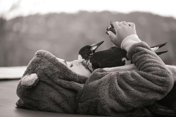 Сорока по имени Пингвин дружит со своими спасителями всю жизнь