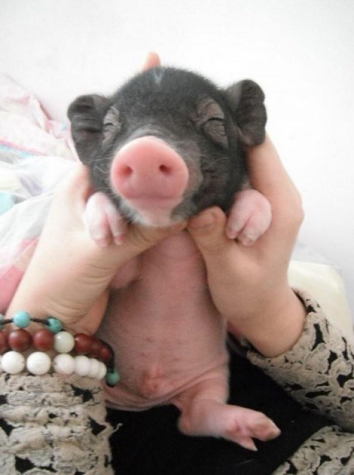 30 малышей животных в руках у людей
