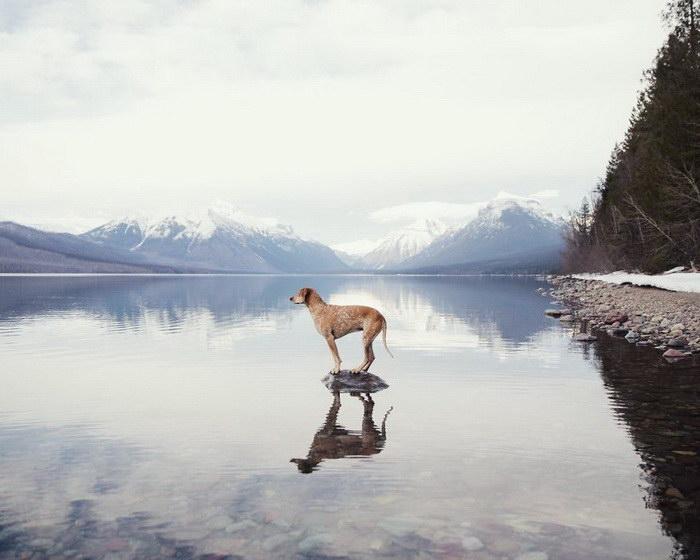 Мужчина путешествует по Америке с любимой собакой