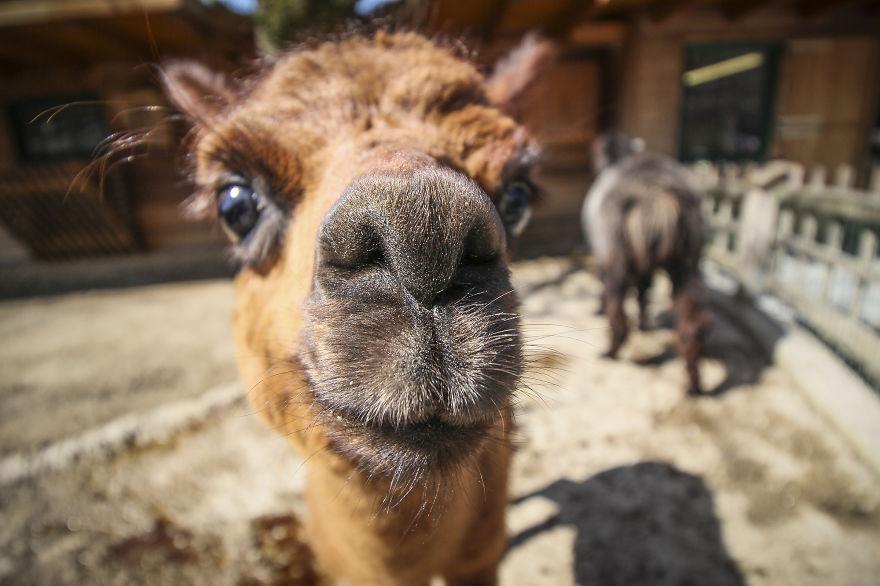 Смешные портреты животных Chanel Cartell