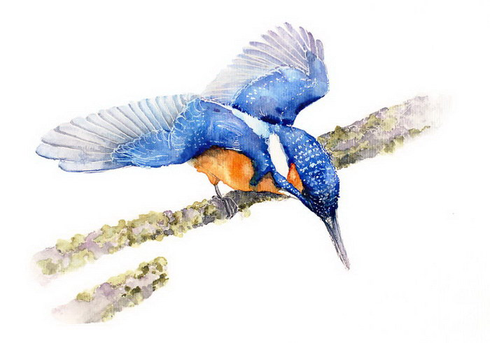 Акварельные птицы Karolina Kijak