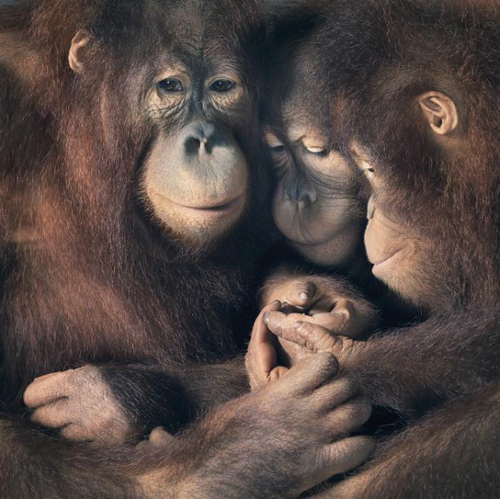 Животные как люди