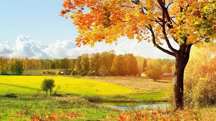 Красивые фотографии осенней природы