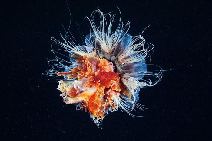 Невероятные фотографии подводного мира Александра Семенова
