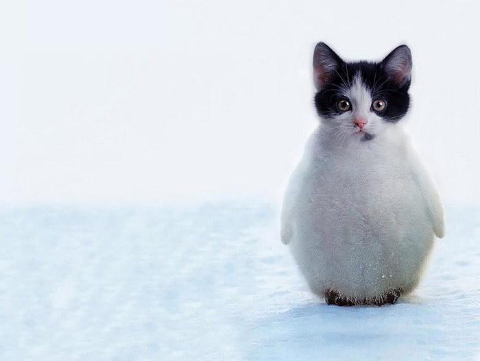 Животные-гибриды, которые удивят каждого из вас