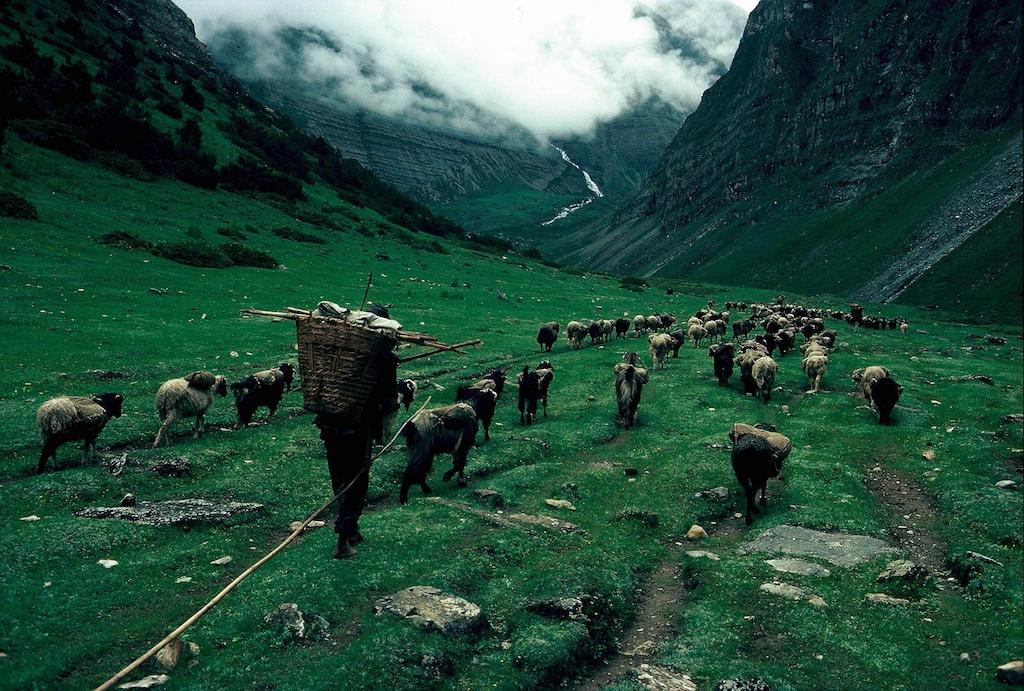 Гималайские фотографии Eric Valli