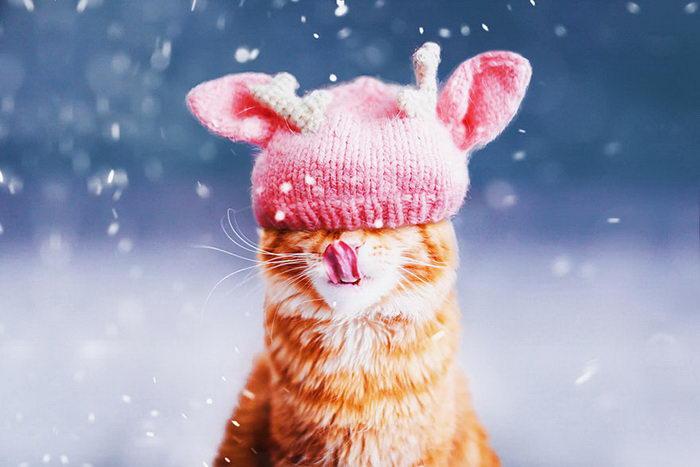 Роскошный кот Кристины Макеевой aka @hobopeeba