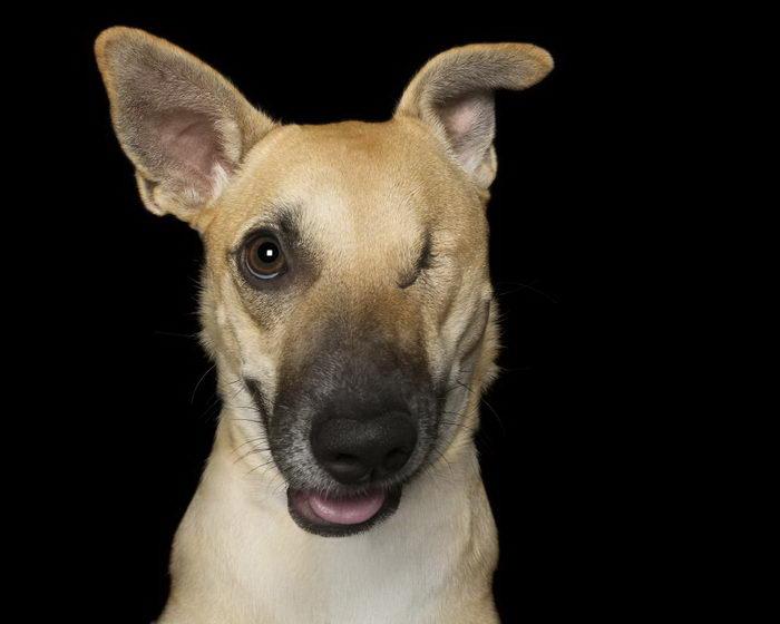 Красота собак с физическими недостатками: работы Marciel J Blake