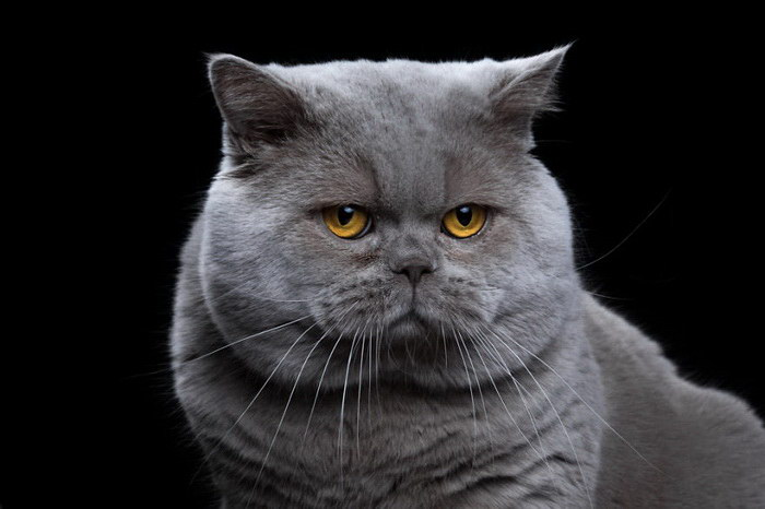 Портреты животных Rob Bahou