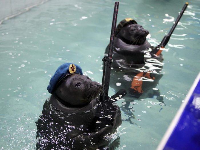 Нерпы-спецназовцы и их выступление к 9 мая