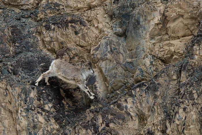 Дикие животные в фотографиях Nathaniel Smalley