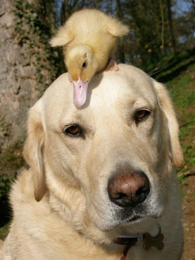 Милые истории о дружбе животных
