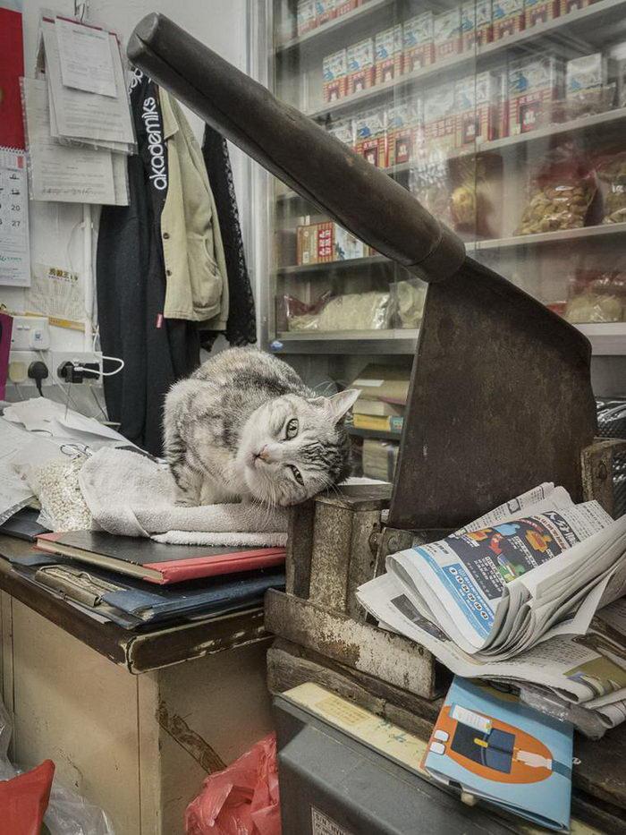 Кошки магазинов Гонконга в фотографиях Marcel Heijnen