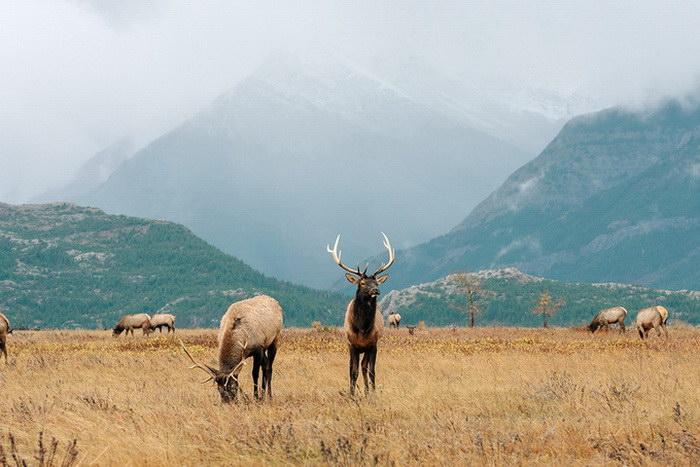 Красота дикой природы в фотографиях Stevin Tuchiwsky