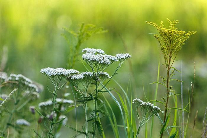 Красота полевых цветов