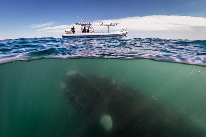 20 впечатляющих фотографий китов