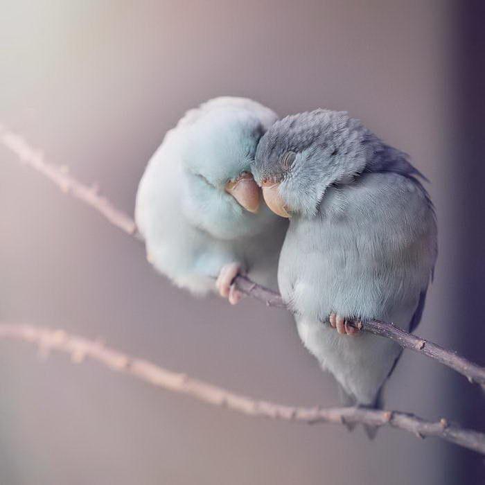 Любовь у попугаев: фотографии Freya Ever After