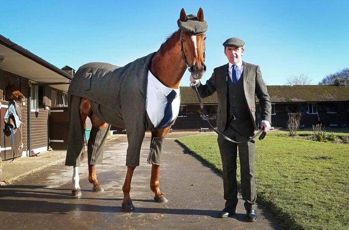 Первый в мире лошадиный твидовый костюм