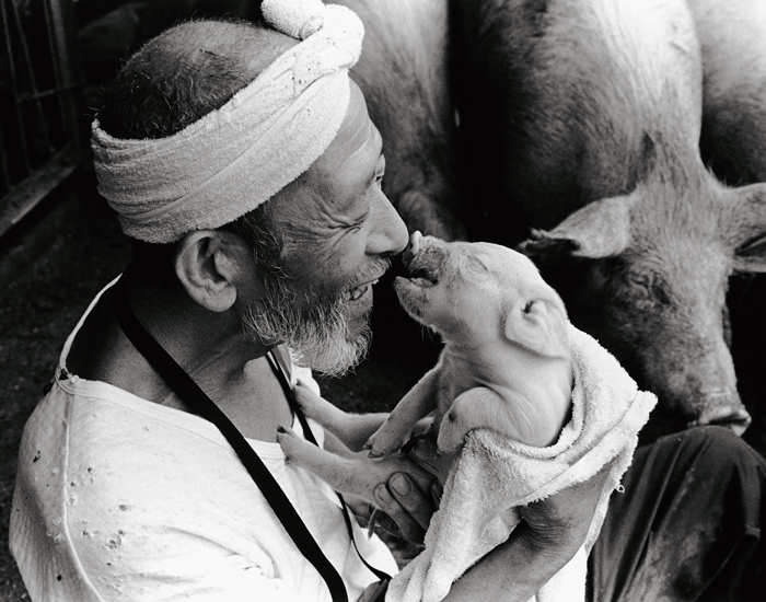 Японски фермер Отчан и его любимые поросята