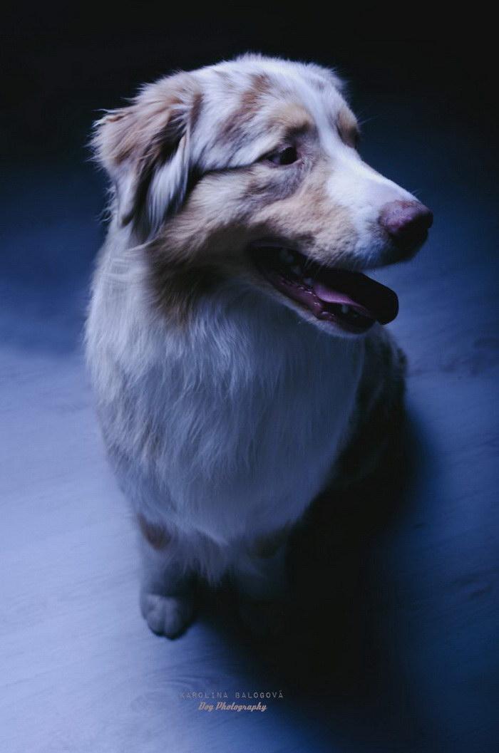 Портреты собак Karolina Balogova