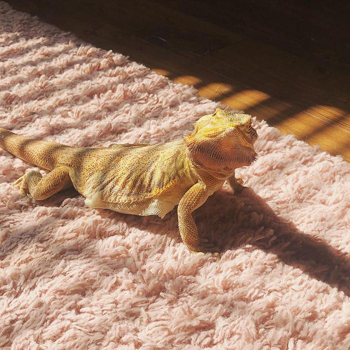 30 животных, которые любят загорать больше чем вы