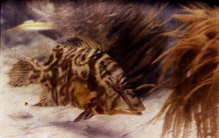 Первая подводная цветная фотография,   1926 год