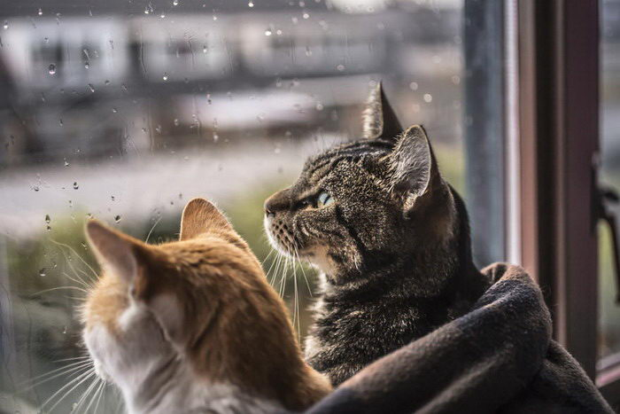 Кошки у окна в фотографиях Felicity Berkleef