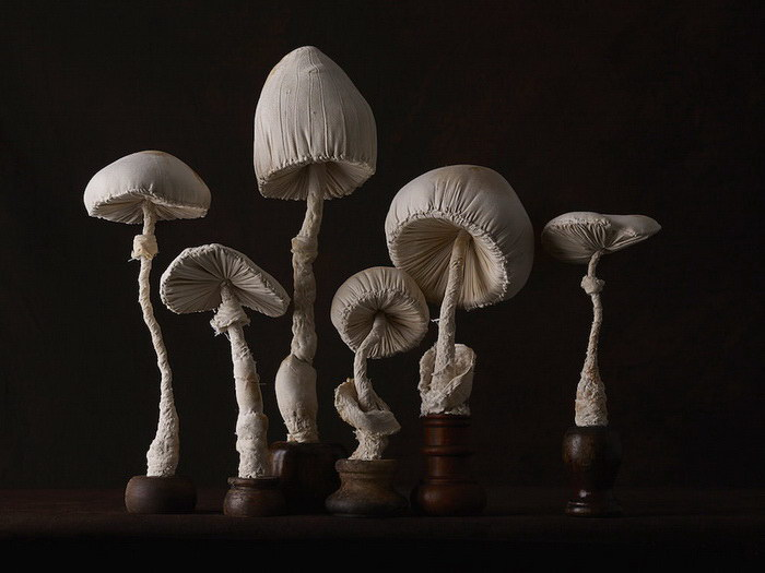 Магические тканевые скульптуры грибов Mister Finch