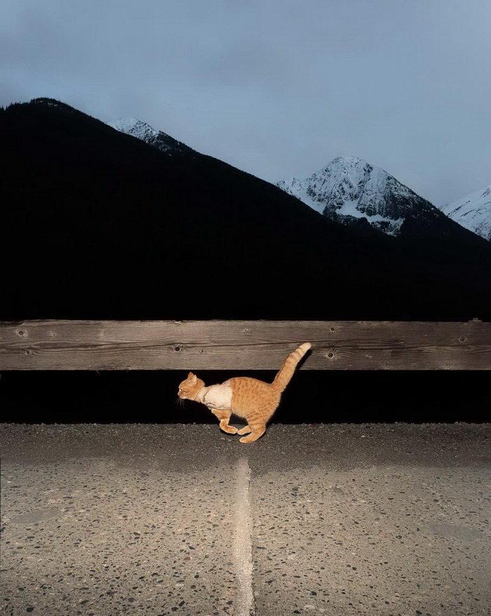 Странные снимки животных Benoit Paille