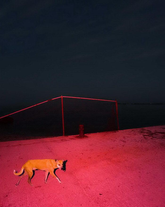 Странные снимки животных Benoit Paillé